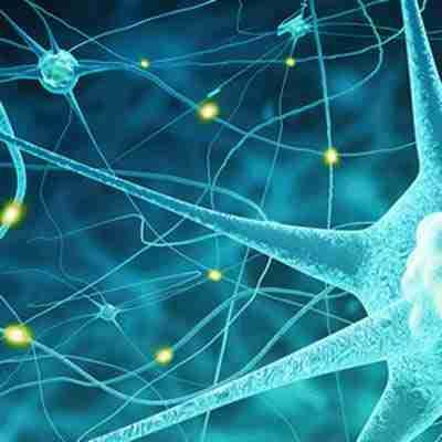 Nervo Vago Salute Scienza E Yoga - Sistema Nervoso
