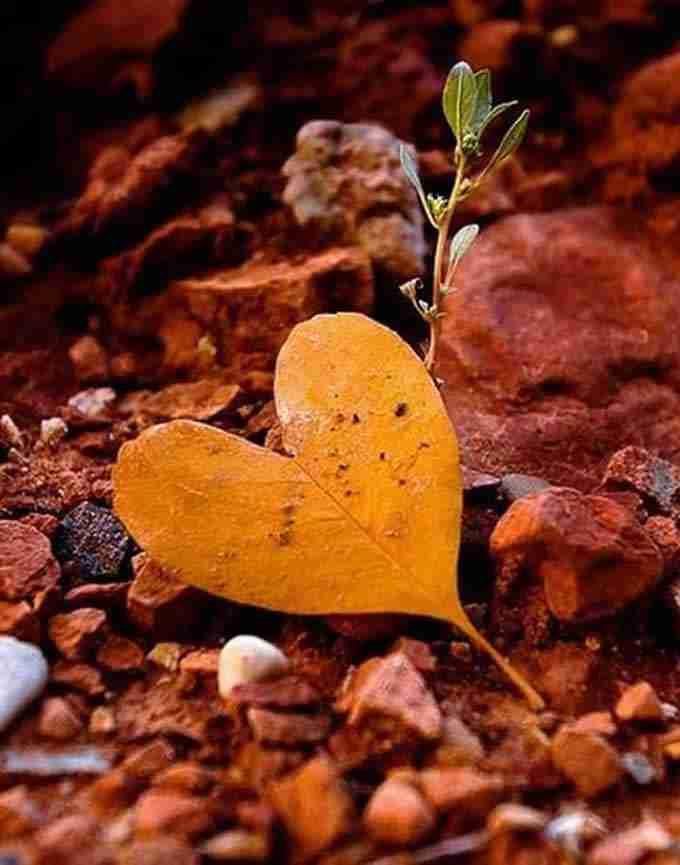 Il Cuore Spirituale - Eternità del Cuore